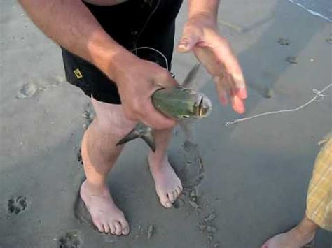 Catching a Blue Fish and Sand Shark - YouTube